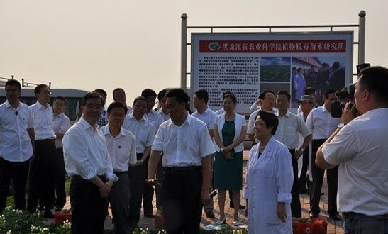 国务院副总理汪洋莅临黑龙江省农科院植物脱毒苗木研究所-薯卫士_马铃薯支持平台