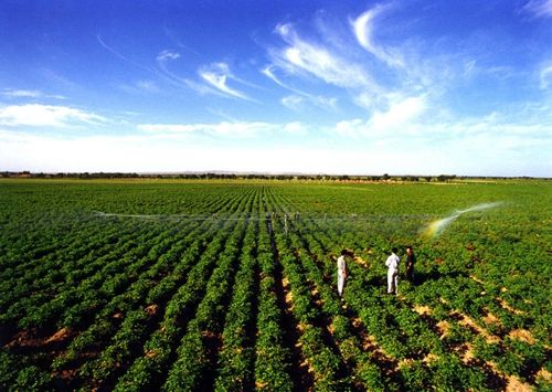 调种购种时要了解马铃薯种薯的品种和特点_薯卫士_马铃薯支持平台