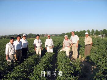 重庆市农技总站关于比利时马铃薯品种管理的考察报告_薯卫士_马铃薯支持平台