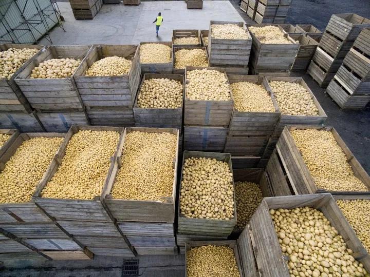制约内蒙古推进马铃薯产业发展的指导意见_薯卫士_马铃薯支持平台