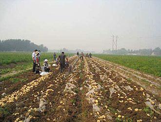 不同环境条件对马铃薯生长及产量的影响_薯卫士_马铃薯支持平台
