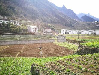 2018巫溪县马铃薯晚疫病监测预警决策第一期_薯卫士_马铃薯支持平台