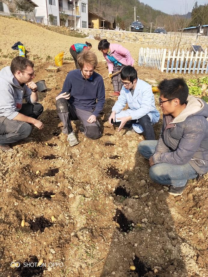 比利时专家在巫溪(2019初春)_薯卫士_马铃薯支持平台