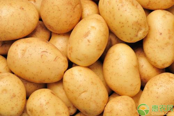 马铃薯怎么种植能高产?_薯卫士_马铃薯支持平台